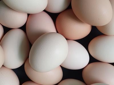 jajka-na-sprzedaz